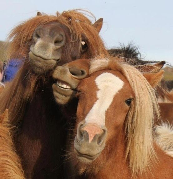 horses-faces-pics