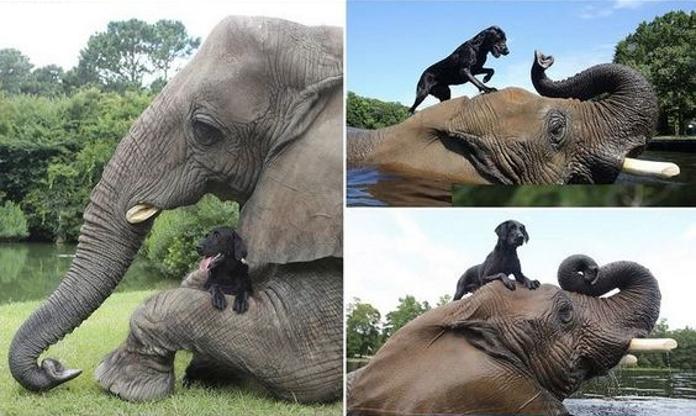 Слон і собака – Баблс і Белла – кращі друзі. Відео