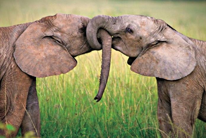 Тварини теж люблять цілуватися. Дивіться, які милі