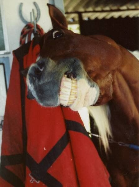teeth-horse-photo