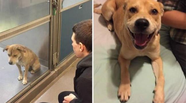 Неймовірні перевтілення собак, яких забрали з притулку