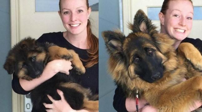 Як виростають щенята за 6 місяців? Це шаленство!