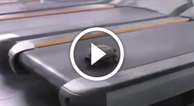 Розрив шаблону: черепаха на біговій доріжці!
