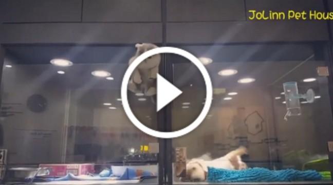 Сміливе кошеня показало, що таке справжня дружба!