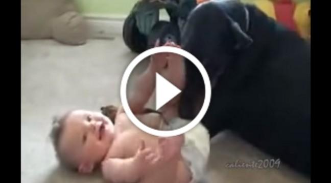 Доберман знає, як розвеселити немовля