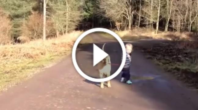 Хлопчик вигулював собаку, доки не побачив калюжу. Дивіться, що зробив :)