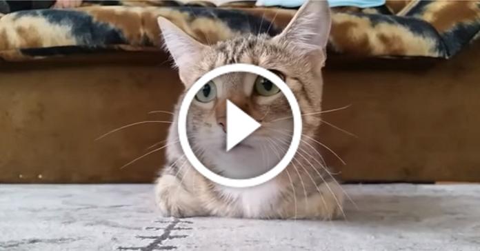 Дуже емоційний кіт дивиться фільм жахів