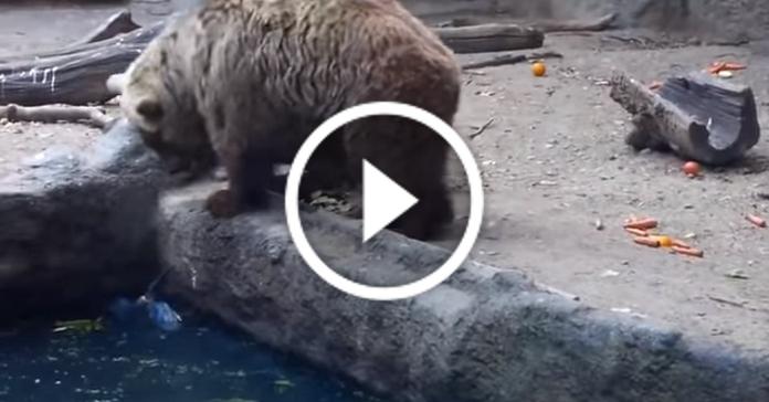 Ведмідь рятує потопаючу ворону. Неймовірно!