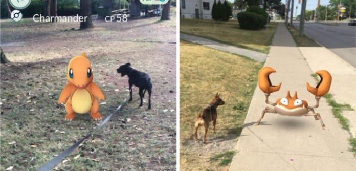 pokemon-goa-dog-walking-animal-shelter-muncie-9-723x347_c
