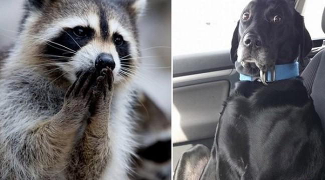 Тварини, які не вміють приховувати свої емоції