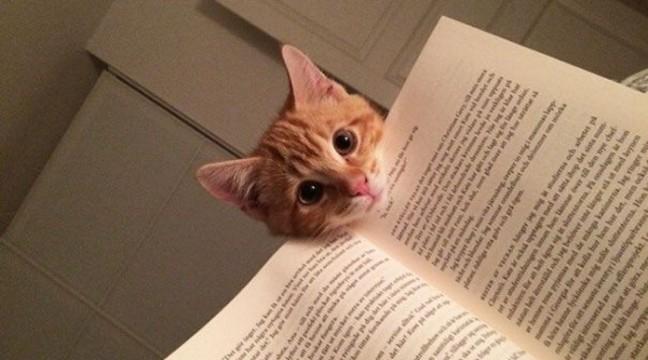 10 котів, які чхати хотіли на ваш особистий простір