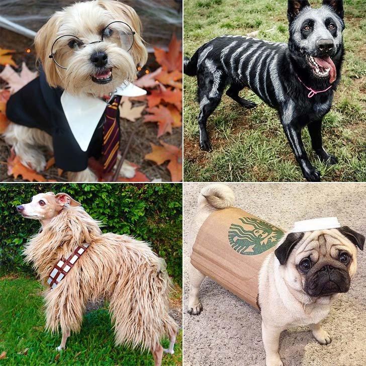 DIY-Halloween-Costumes-Dogs