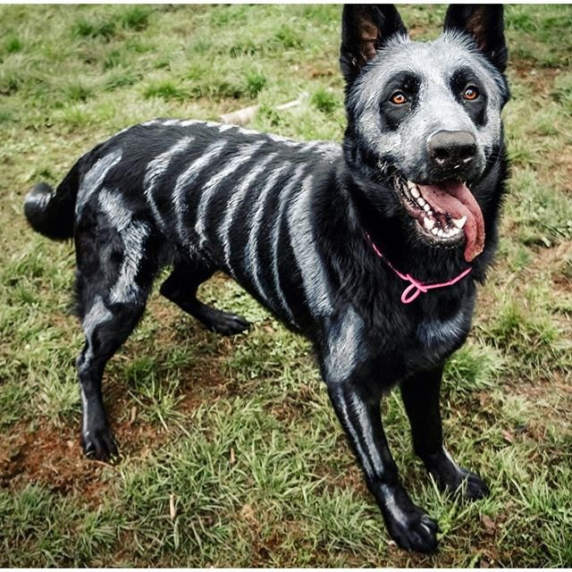 Skele-Dog