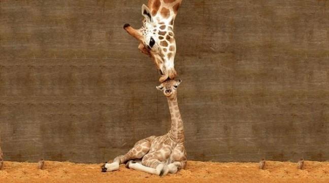 Кращі сімейні фото тварин