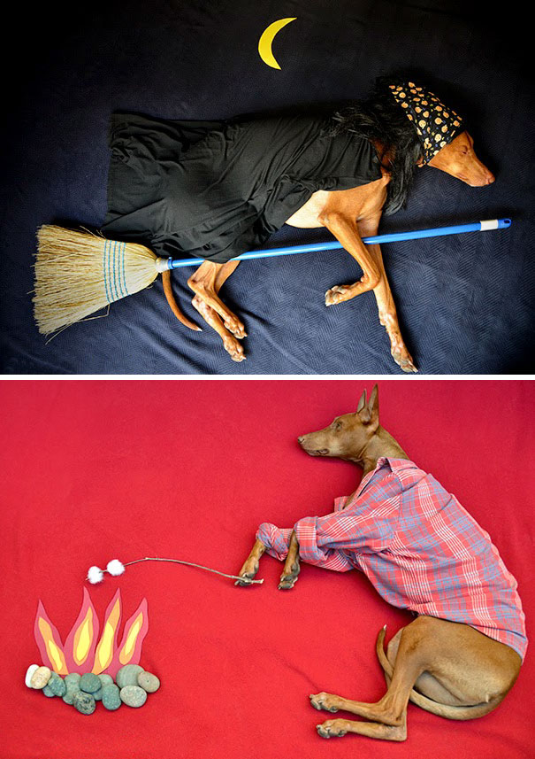 creative-dog-owners-35-57bc3278f2313__605