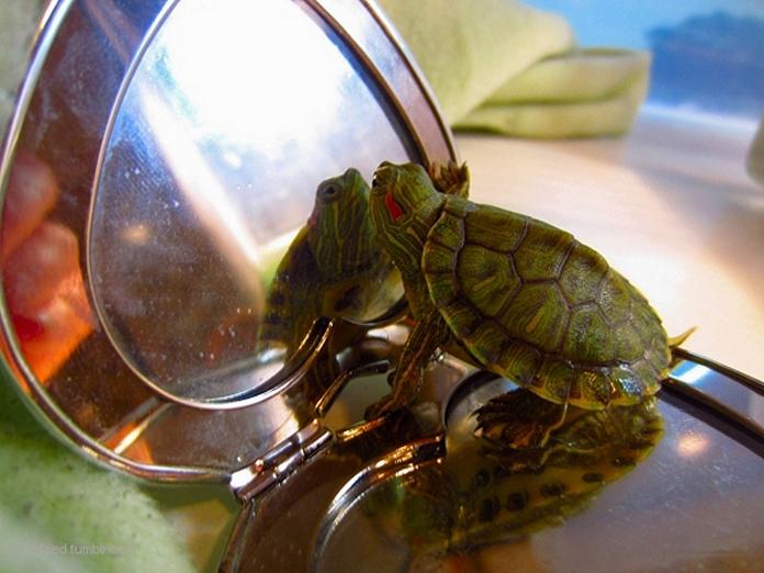 20 життєвих уроків людям від черепах