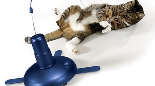16 крутих винаходів, від яких ви і ваш кіт будете в захваті