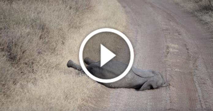 Капризне слоненя. Хто впізнає себе? :)