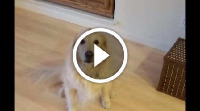 """Варто господарям сказати цьому собаці """"прибери у будинку"""", як починається от що!"""
