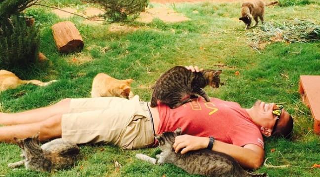 На Гаваях знайшли райське місце, де живе 500 котів