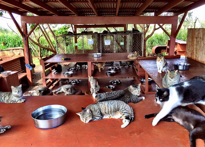 lanai-cat-sanctuary-hawaii-8