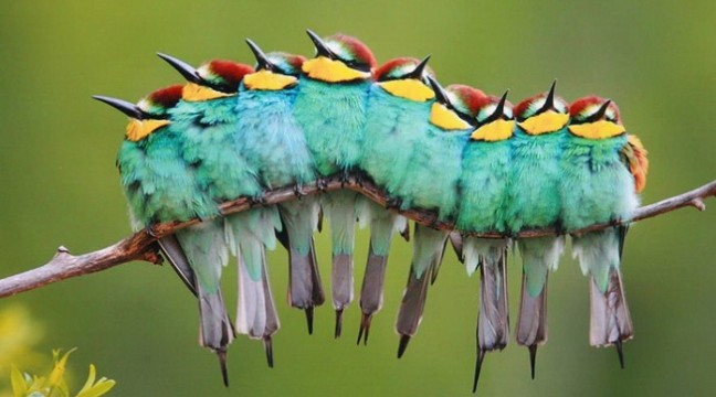 10 фото пташок, які готові до зустрічі з осінню