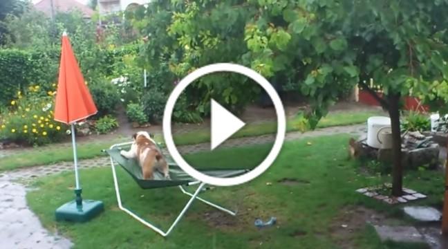 Найжиттєрадісніший пес у світі вчить нас радіти дощу :)