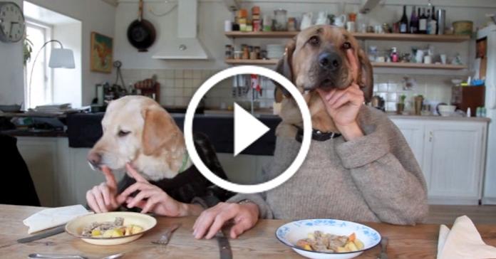 Такого ми ще не бачили – інтелігентні собаки їдять у кафе. Відео