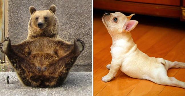 15 тварин-йог, які надихнуть вас зайнятися своїм тілом