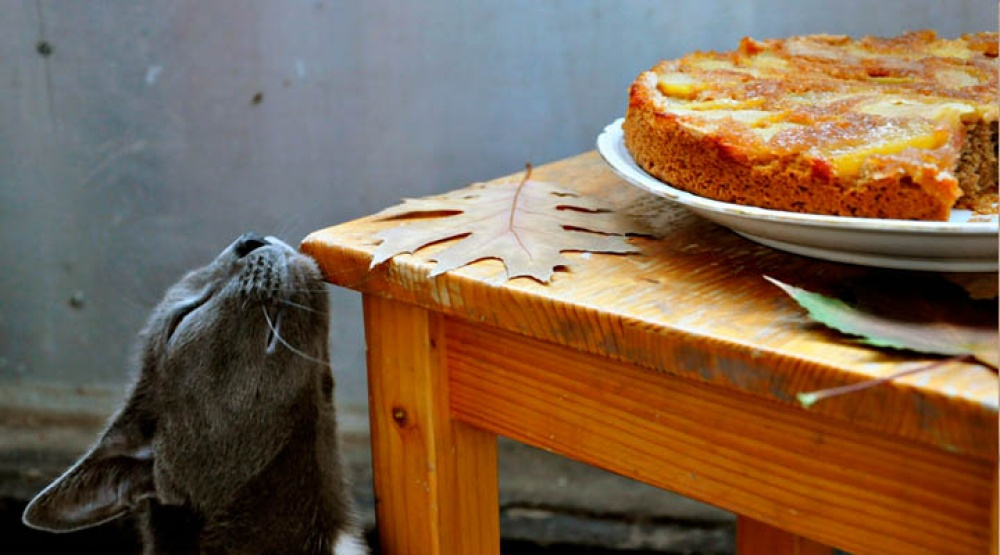 17027865-Upside-Down-Vegetarian-Apple-and-Cinnamon-Pie-Cat-1473072266-1000-f5a30e8a0f-1473157128