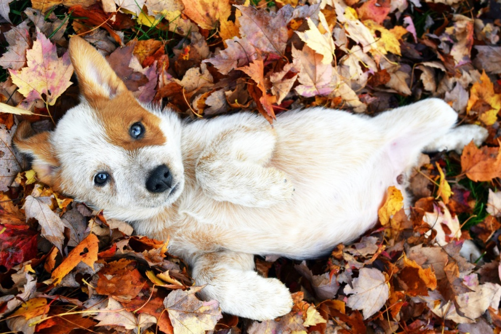 17028365-foster-puppy-came-to-play-in-the-leaves--dogs-cuteimagesnet-1473142241-1000-1b1c3e53b5-1473157128