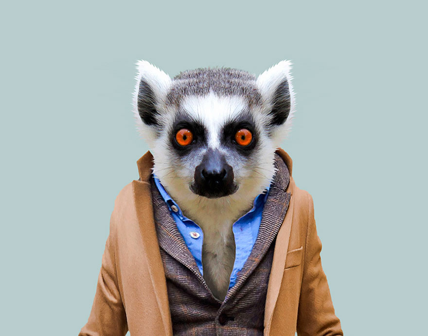 animals-dressed-like-humans-zoo-porraits-yago-partal-109-57d65dbcb522f__880