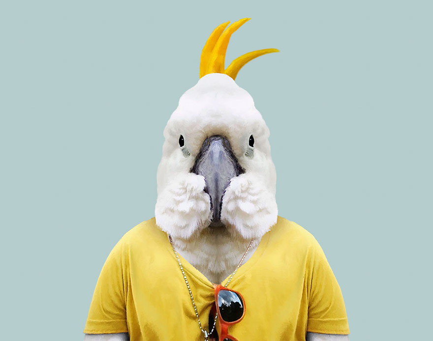 animals-dressed-like-humans-zoo-porraits-yago-partal-130-57d65defec75b__880