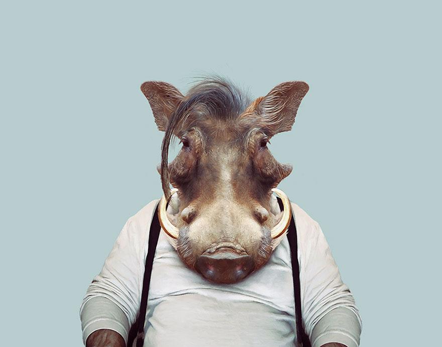 animals-dressed-like-humans-zoo-porraits-yago-partal-138-57d65e005fb79__880