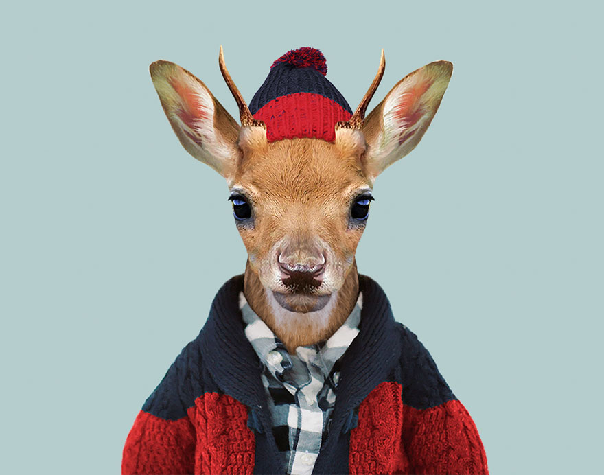 animals-dressed-like-humans-zoo-porraits-yago-partal-144-57d65e0b665ca__880