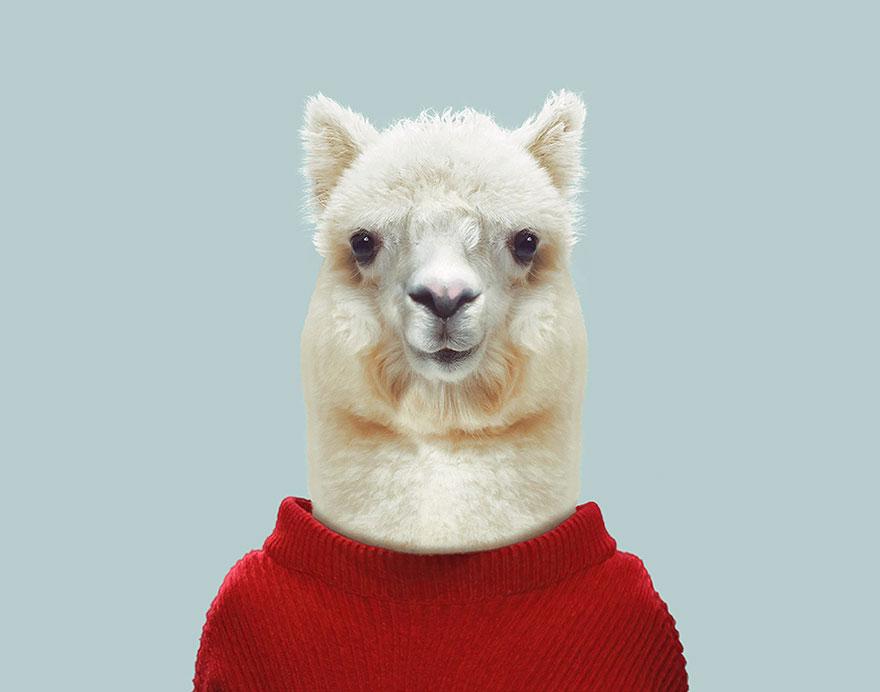 animals-dressed-like-humans-zoo-porraits-yago-partal-3-57d65caaea241__880