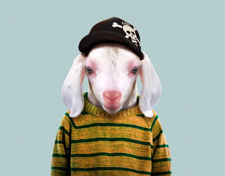 animals-dressed-like-humans-zoo-porraits-yago-partal-42-57d65d1aca63c__880