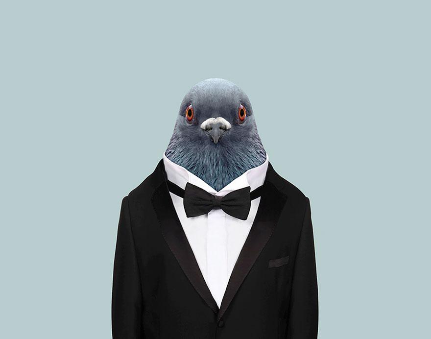 animals-dressed-like-humans-zoo-porraits-yago-partal-44-57d65d1df2b40__880