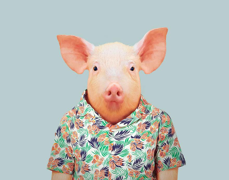 animals-dressed-like-humans-zoo-porraits-yago-partal-45-57d65d1fb7565__880