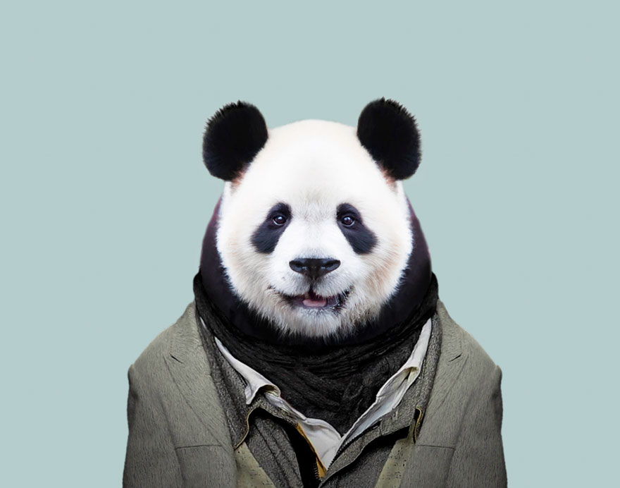 animals-dressed-like-humans-zoo-porraits-yago-partal-59-57d65d3de26dc__880