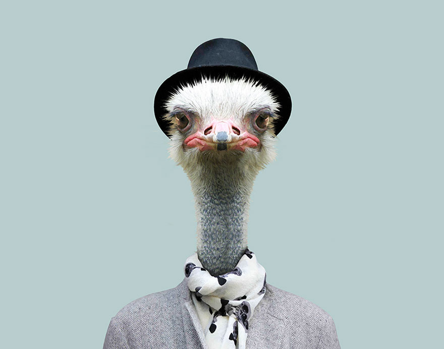 animals-dressed-like-humans-zoo-porraits-yago-partal-94-57d65da2a5f0a__880