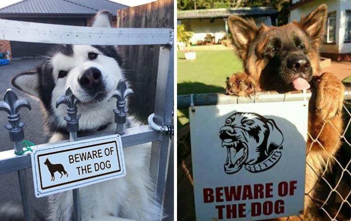 """Що ховається за табличками """"обережно, злий пес""""?"""