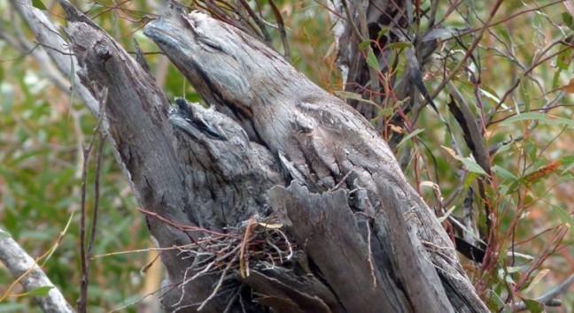 Уважно подивіться на цю гілку. Скільки пташок ви бачите?