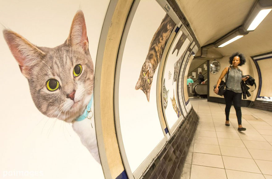cat-ads-underground-subway-metro-london-6
