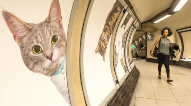 В метро Лондона набридливу рекламу замінили світлинами котят