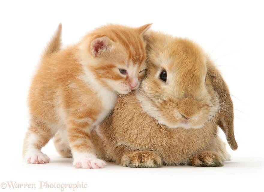 cute-matching-pets-warren-photographic-10-57e934fe311a0__880