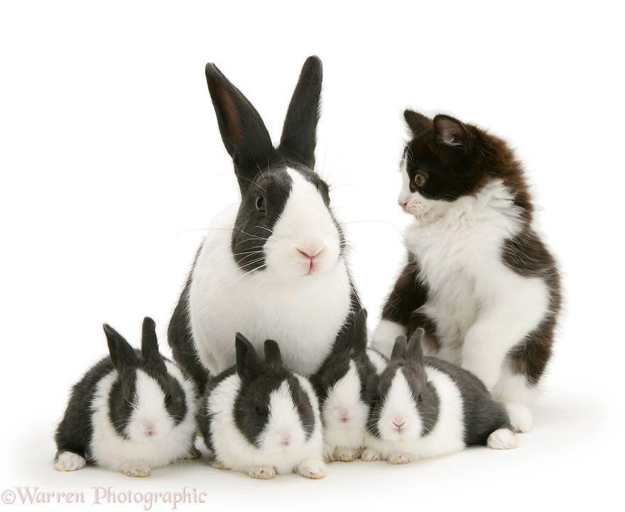 cute-matching-pets-warren-photographic-13-57e93506accb6__880