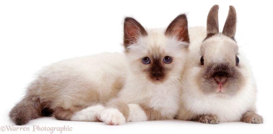 cute-matching-pets-warren-photographic-2-57e934eb07951__880