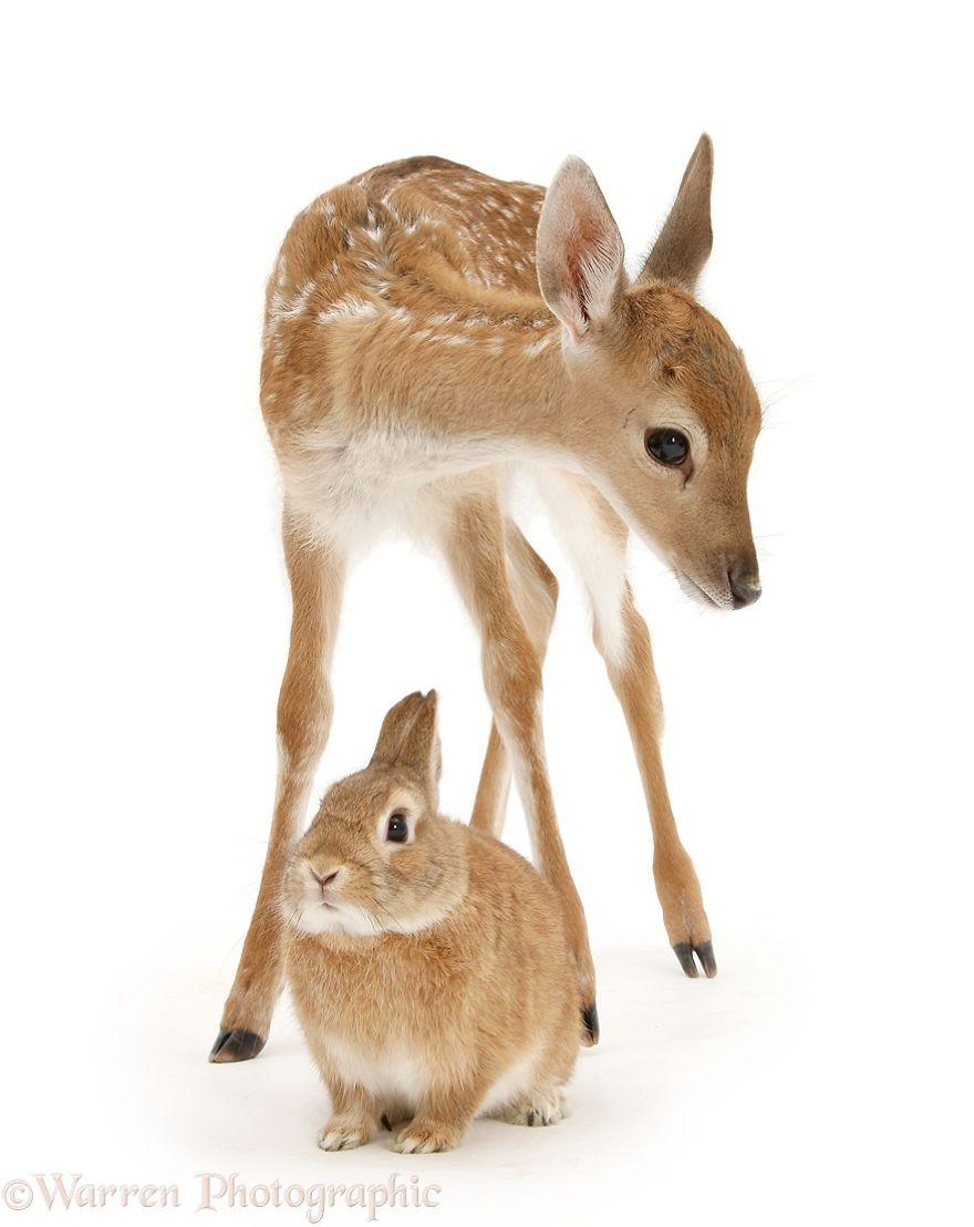 cute-matching-pets-warren-photographic-25-57e935225710e__880