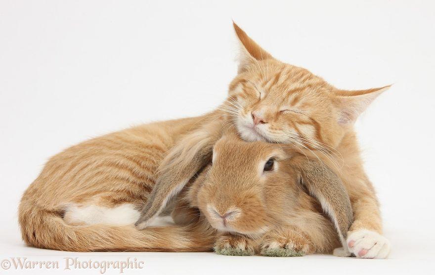 cute-matching-pets-warren-photographic-29-57e9352d79290__880